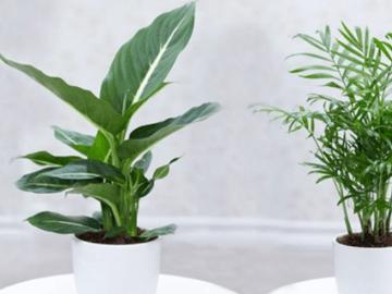 BALDUR-Garten Gutscheincode: CHF 5.- Rabatt auf deinen Einkauf